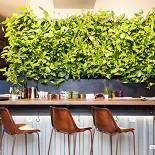 Ресторан Shaggy Dog - фотография 3