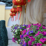 Ресторан Золотой бамбук - фотография 5 - Летняя веранда