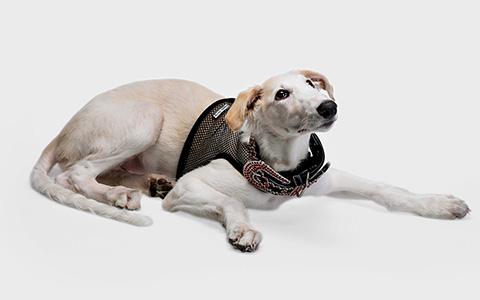 Комбинезон «Тузик» и другая зимняя одежда для собак