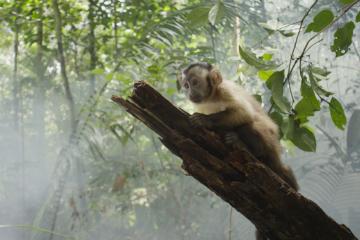 Фильм дня: «Амазония» в 3D Тьерри Рагобера