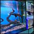 Ресторан Fish House - фотография 13