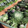 Встречаем осень в садоводстве Боде