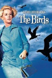 Птицы / The Birds