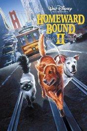 Долгая дорога домой-2: Потерянные в Сан-Франциско / Homeward Bound II: Lost in San Francisco