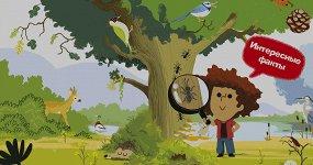 9 интересных книг, которые помогут влюбить ребенка в природу