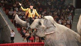 Шоу индийских слонов