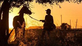 5 новых восхитительных фильмов с лошадьми, родео и быками