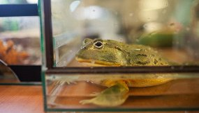 Сокровища Биологического музея (онлайн-трансляция)