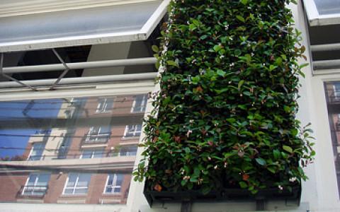 Озеленение больниц мхом, возрождение народных промыслов, новые пешеходные мосты и другие идеи