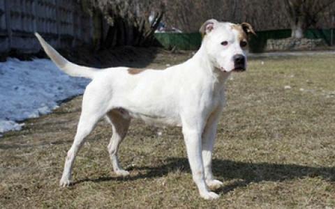 В парке Горького раздадут собак из приютов