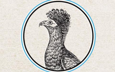 Неделя экологии в Манеже, открытие парикмахерской Ptichka и другие городские новости
