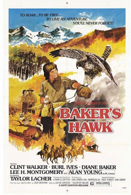 Ястреб Бейкера (Baker's Hawk)