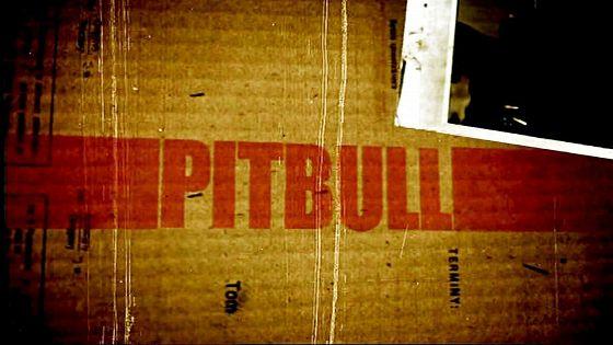 Питбуль (Pitbull)