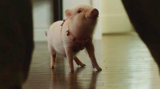Арло: Говорящий поросенок (Arlo: The Burping Pig)