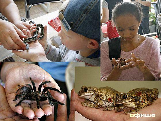 Живые насекомые, пауки и ...