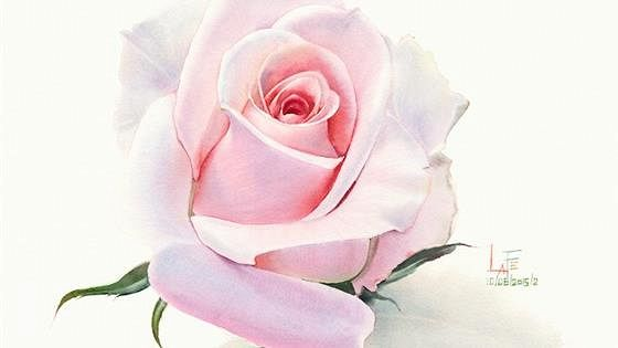 ЛаФе. Неувядаемая роза