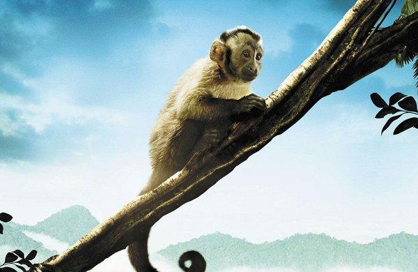 Лучшие фильмы про природу