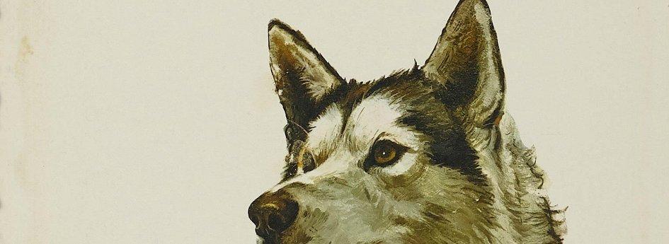 Кино: «Никки, дикая собака Севера»