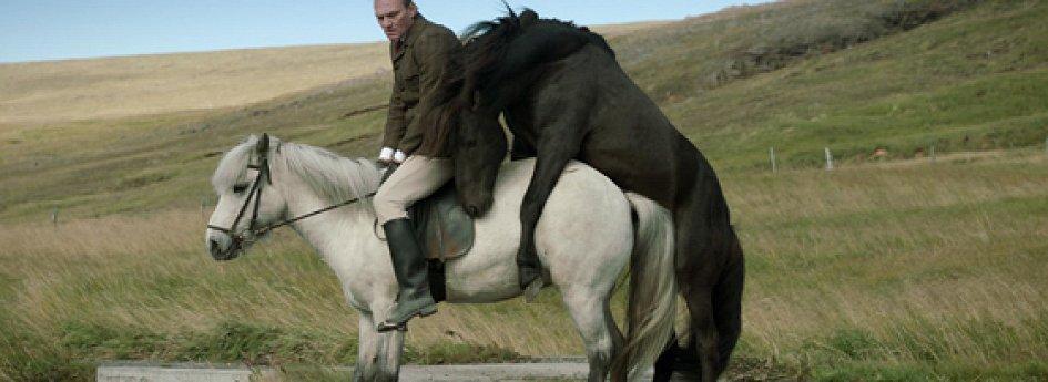Кино: «О лошадях и людях»