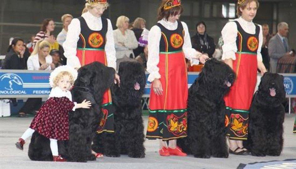 Выставки: XXII Интернациональная выставка собак всех пород «Россия-2015»