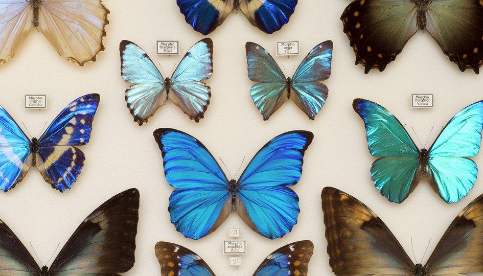 Выставки: Эстетика и богатство мира насекомых