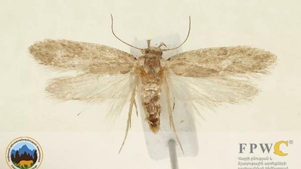 ВАрмении ученые открыли новый виднасекомых