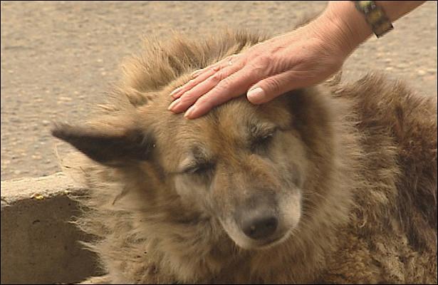 Памятник собаке, 12летпрождавшей сбитого хозяина наостановке, установят вХабаровском крае