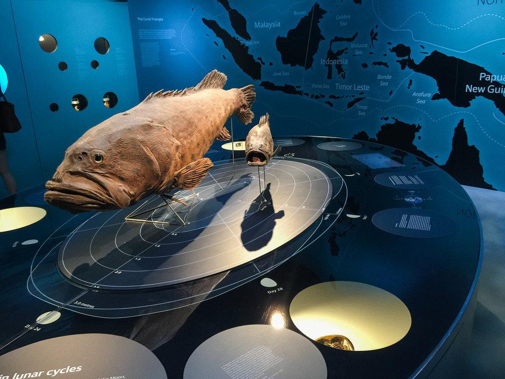 Bnc history museum review zodiac