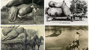 Исторические фото, которые непонять безобъяснения
