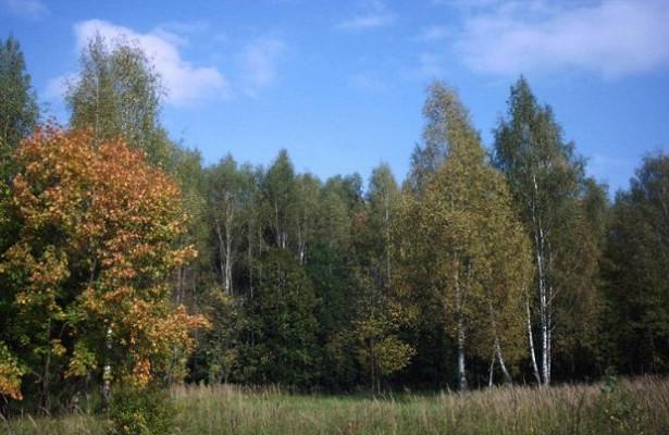 Ущерб подмосковным лесам оценен в7,7млнрублей
