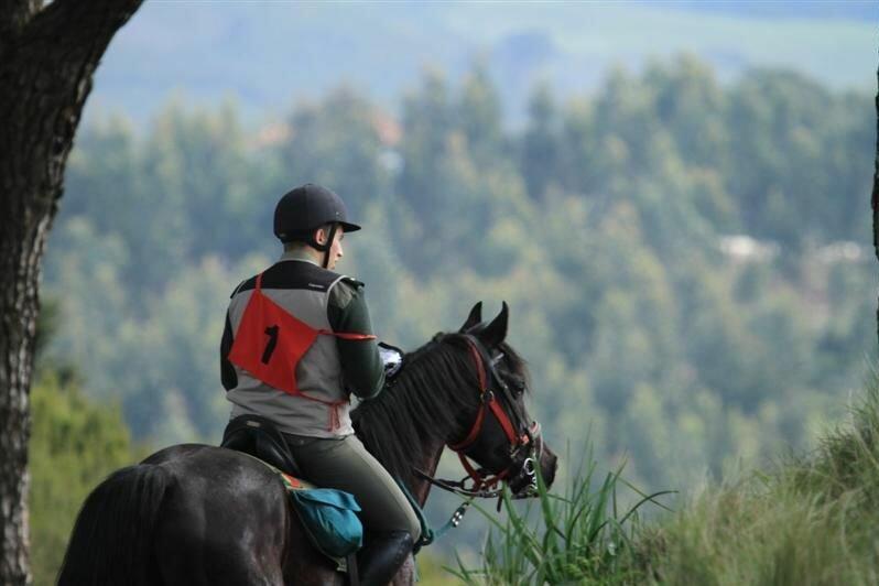 программа по конному туризму для удо