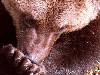 ВМагадане водитель сбил медвежонка