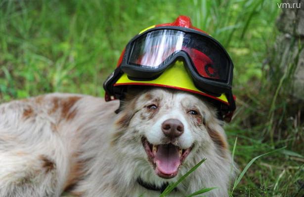 Эксперты рассказали, каксобаки спасают человека отстресса излости