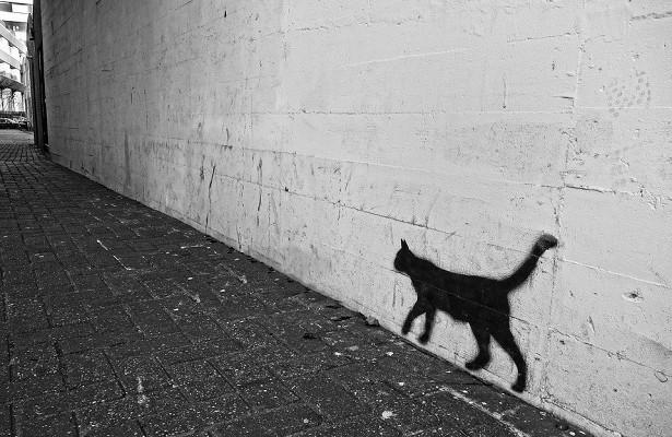 Выставка фотографий кошек открылась вбиблиотеке наУсиевича
