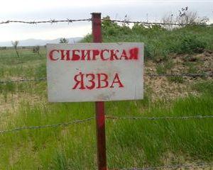 Завспышку сибирской язвы наЯмале ответили ветеринары