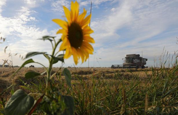 Заброшенные сельхозземли снова вернут воборот