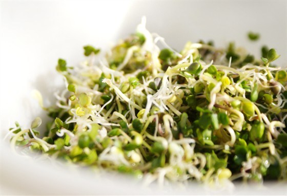 Салат из чечевичных проростков