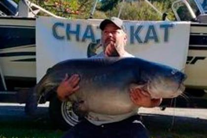 Рыболов поймал налеща сома рекордного размера