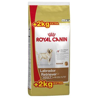 Корм royal canin для лабрадора